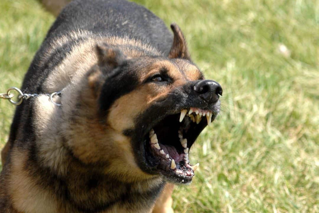 Dog Bite Personal Injury
